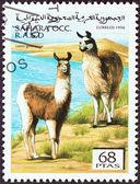 WESTERN SAHARA - CIRCA 1996: A stamp printed in Western Sahara shows Lama guanicoe, circa 1996. — Foto Stock