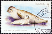 ICELAND - CIRCA 2010: A stamp printed in Iceland shows Harbor seals (Phoca vitulina), circa 2010. — Photo