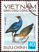 "VIETNAM - CIRCA 1972: A stamp printed in North Vietnam from the ""Vietnamese Birds"" issue shows Watercock (Gallicrex cinerea), circa 1972. — 图库照片"