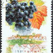 "Stock Photo: HUNGARY - CIRC1990: stamp printed in Hungary from ""Wine Grapes and Regions (1st series)"" issue shows Cabernet Franc, Hajos, circ1990."