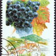 "Stock Photo: HUNGARY - CIRC1990: stamp printed in Hungary from ""Wine Grapes and Regions (1st series)"" issue shows Kadarka, Szekszard, circ1990."