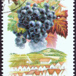 "Stock Photo: HUNGARY - CIRC1990: stamp printed in Hungary from ""Wine Grapes and Regions (1st series)"" issue shows Cabernet Sauvignon, Villany, circ1990."