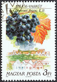 """HUNGARY - CIRCA 1990: A stamp printed in Hungary from the """"Wine Grapes and Regions (1st series)"""" issue shows Cabernet Franc, Hajos, circa 1990. — Stock Photo"""