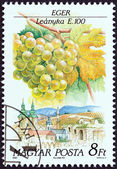"""HUNGARY - CIRCA 1990: A stamp printed in Hungary from the """"Wine Grapes and Regions (1st series)"""" issue shows Leanyka, Eger, circa 1990. — Stock Photo"""