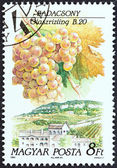 """HUNGARY - CIRCA 1990: A stamp printed in Hungary from the """"Wine Grapes and Regions (1st series)"""" issue shows Riesling, Badacsony, circa 1990. — Stock Photo"""