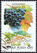 """HUNGARY - CIRCA 1990: A stamp printed in Hungary from the """"Wine Grapes and Regions (1st series)"""" issue shows Kadarka, Szekszard, circa 1990. — Stock Photo"""