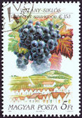 """HUNGARY - CIRCA 1990: A stamp printed in Hungary from the """"Wine Grapes and Regions (1st series)"""" issue shows Cabernet Sauvignon, Villany, circa 1990. — Stock Photo"""