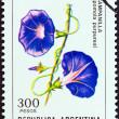 """ARGENTINA - CIRCA 1982: A stamp printed in Argentina from the """"Flowers """" issue shows Purple Morning Glory (Ipomoea purpurea), circa 1982. — Stock Photo"""