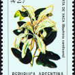 "ARGENTINA - CIRCA 1988: A stamp printed in Argentina from the ""Flowers "" issue shows Brazilian orchid tree (Bauhinia candicans), circa 1988. — Stock Photo"