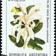 "ARGENTINA - CIRCA 1983: A stamp printed in Argentina from the ""Flowers "" issue shows Brazilian orchid tree (Bauhinia candicans), circa 1983. — Stock Photo"