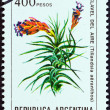 """ARGENTINA - CIRCA 1982: A stamp printed in Argentina from the """"Flowers """" issue shows Tillandsia aeranthos, circa 1982. — Stock Photo"""