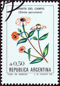 "ARGENTINA - CIRCA 1985: A stamp printed in Argentina from the ""Flowers "" issue shows Peruvian Zinnia (Zinnia peruviana), circa 1985. — Stock Photo"