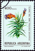 "ARGENTINA - CIRCA 1982: A stamp printed in Argentina from the ""Flowers "" issue shows Tillandsia aeranthos, circa 1982. — Stock Photo"