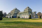 El palmenhaus en schonbrunn palace park, Viena, austria — Foto de Stock
