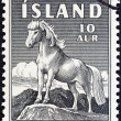 Stock Photo: ICELAND - CIRC1958: stamp printed in Iceland shows Icelandic Pony, circ1958.