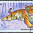 "VIETNAM - CIRCA 1984: A stamp printed in North Vietnam from the ""Protected Animals "" issue shows Tiger (Panthera tigris), circa 1984. — Stock Photo"