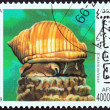 "AFGHANISTAN - CIRC1999: stamp printed in Afghanistfrom ""Snails "" issue shows Cassis sulcosa, circ1999. — Stock Photo #39143099"