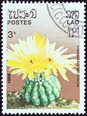 "LAOS - CIRCA 1986: A stamp printed in Laos from the ""Cacti"" issue shows Notocactus crassigibbus, circa 1986. — Stock Photo"