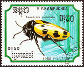 "KAMPUCHEA - CIRCA 1988: A stamp printed in Kampuchea from the ""Insects "" issue shows Blister Beetle (Zonabride geminata), circa 1988. — Stock Photo"