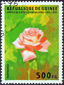 "GUINEA - CIRCA 1995: A stamp printed in Guinea from the ""Flowers"" issue shows Rose (Gail Borden), circa 1995. — Stock Photo"