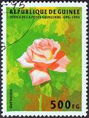 ギニア - 1995年年頃:「花」の問題からギニアで印刷スタンプ示しますバラ (gail ボーデン)、1995年年頃. — ストック写真