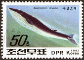 "NORTH KOREA - CIRCA 1992: A stamp printed in North Korea from the ""Whales and Dolphins "" issue shows Fin Whale (Balaenoptera physalus), circa 1992. — Foto de Stock"