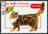 "SAO TOME AND PRINCIPE - CIRCA 2004: A stamp printed in Sao Tome and Principe from the ""Cats "" issue shows Maine Coon, circa 2004. — Stock Photo"