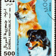 "SOMALIA - CIRCA 1999: A stamp printed in Somalia from the ""Dogs "" issue shows Australian Shepherd and Chinook, circa 1999. — Stock Photo"