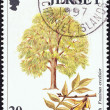 "JERSEY - CIRCA 1997: A stamp printed in United Kingdom from the ""Trees"" issue shows Ash tree (Fraxinus excelsior), circa 1997. — Stock Photo"