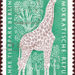 GERMAN DEMOCRATIC REPUBLIC - CIRCA 1965: A stamp printed in Germany issued for the 10th anniversary of East Berlin Zoo shows Giraffe, circa 1965. — Stock Photo