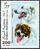 """SOMALIA - CIRCA 1999: A stamp printed in Somalia from the """"Dogs """" issue shows Muscovite Guard Dog and Akbash Dog, circa 1999. — Stock Photo"""