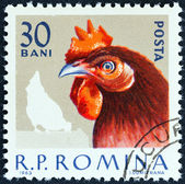 """ROMANIA - CIRCA 1963: A stamp printed in Romania from the """"Domestic Poultry """" issue shows Cockerel, circa 1963. — Stock Photo"""
