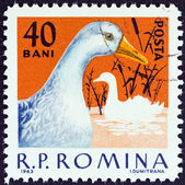 """ROMANIA - CIRCA 1963: A stamp printed in Romania from the """"Domestic Poultry """" issue shows Duck, circa 1963. — Stock Photo"""