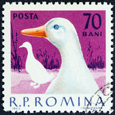 "ROMANIA - CIRCA 1963: A stamp printed in Romania from the ""Domestic Poultry "" issue shows Goose, circa 1963. — Stock Photo"