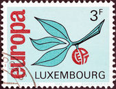 "LUXEMBOURG - CIRCA 1965: A stamp printed in Luxembourg from the ""Europa"" issue shows Europa Sprig, circa 1965. — Stock Photo"