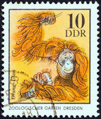 """GERMAN DEMOCRATIC REPUBLIC - CIRCA 1975: A stamp printed in Germany from the """"Zoo Animals"""" issue shows orangutans, circa 1975. — Stock Photo"""