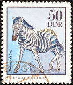 "GERMAN DEMOCRATIC REPUBLIC - CIRCA 1975: A stamp printed in Germany from the ""Zoo Animals"" issue shows a Common zebra, circa 1975. — Stock Photo"