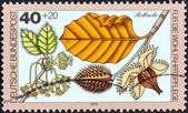 "GERMANY - CIRCA 1979: A stamp printed in Germany from the ""Humanitarian Relief Funds. Woodland Flowers and Fruit"" issue shows Red beech, circa 1979. — Stock Photo"