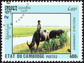 "CAMBODIA - CIRCA 1992: A stamp printed in Cambodia from the ""Environmental Protection "" issue shows boy riding water buffalo, circa 1992. — Stock Photo"