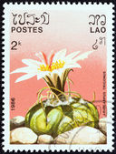 "LAOS - CIRCA 1986: A stamp printed in Laos from the ""Cacti"" issue shows Ariocarpus trigonus, circa 1986. — Stock fotografie"