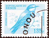 BENIN - CIRCA 2000: A stamp printed in Benin shows a European Bee-eater (Merops apiaster) bird, circa 2000. — Stock Photo