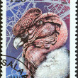 "TANZANIA - CIRCA 1994: A stamp printed in Tanzania from the ""Birds of Prey"" issue shows Andean condor (Vultur gryphus), circa 1994. — Stock Photo #47767015"
