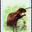 """GRENADA - CIRCA 1976: A stamp printed in Grenada from the """"Flora and Fauna """" issue shows an Orange rumped agouti, circa 1976. — Stock Photo"""