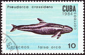 "CUBA - CIRCA 1984: A stamp printed in Cuba from the ""Whales and Dolphins "" issue shows False killer whale, circa 1984. — Foto de Stock"