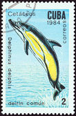 "CUBA - CIRCA 1984: A stamp printed in Cuba from the ""Whales and Dolphins "" issue shows Common dolphin, circa 1984. — Foto de Stock"