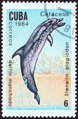 "CUBA - CIRCA 1984: A stamp printed in Cuba from the ""Whales and Dolphins "" issue shows Spotted dolphin, circa 1984. — Foto de Stock"