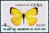 "CUBA - CIRCA 1974: A stamp printed in Cuba from the ""175th birth anniversary of naturalist Felipe Poey"" issue shows a Dina Yellow (Eurema dina dina) butterfly, circa 1974. — Stock Photo"