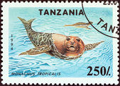 "TANZANIA - CIRCA 1994: A stamp printed in Tanzania from the ""Endangered Species"" issue shows Carribean monk seals (Monachus tropicalis), circa 1994. — Stock Photo"