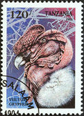 "TANZANIA - CIRCA 1994: A stamp printed in Tanzania from the ""Birds of Prey"" issue shows Andean condor (Vultur gryphus), circa 1994. — Stock Photo"