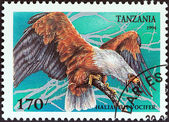 "TANZANIA - CIRCA 1994: A stamp printed in Tanzania from the ""Birds of Prey"" issue shows African fish eagle (Haliaeetus vocifer), circa 1994. — Stock Photo"